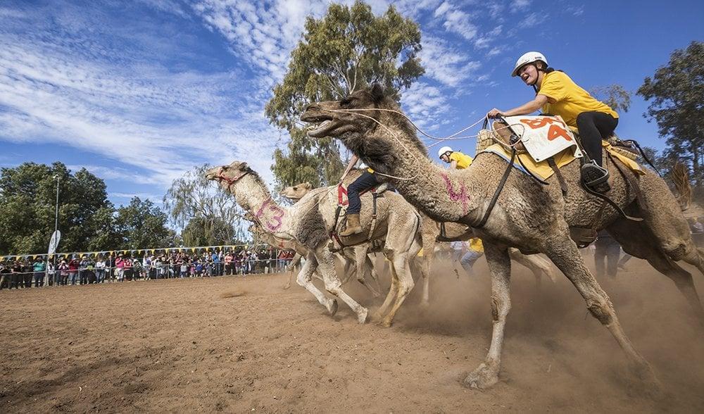 Lasseters Camel Cup - Australian Geographic