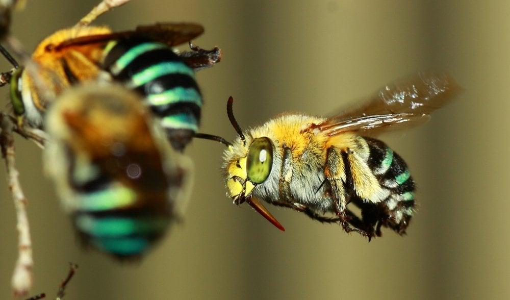 Nature Bee Products Australia