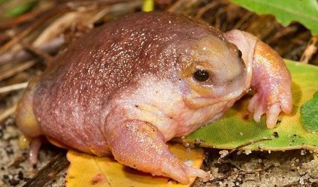 Image result for Turtle Frog